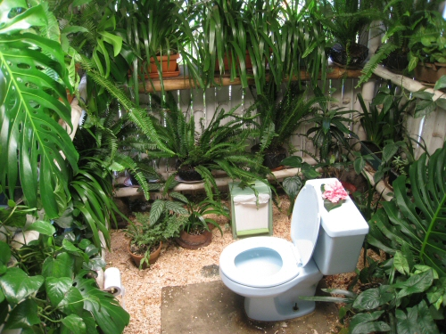 tropical-bathroom-toilet