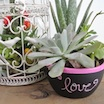 Three Easy Succulent Garden Ideas
